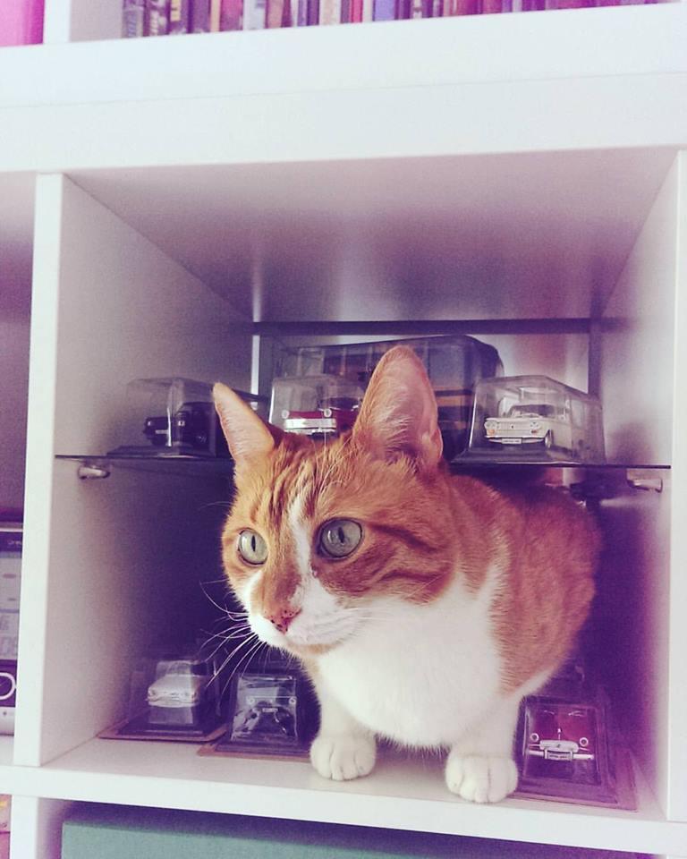 Ognjenove mačke veoma široko shvataju pojam svoje teritorije