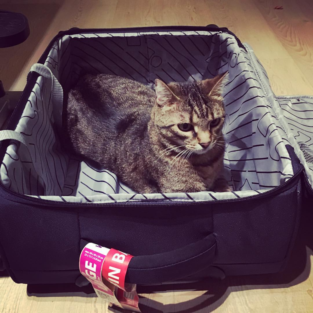 Tanja Tatomirović nije sigurna da li njena mačka želi da krene s njom na put ili da ona ostane kod kuće