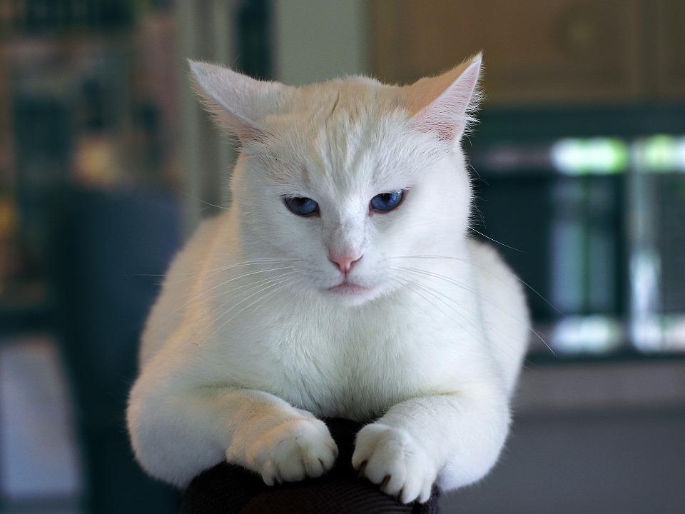 Da bi oštrile kandže o vaš nameštaj, mačke ne čekaju da negde otputujete