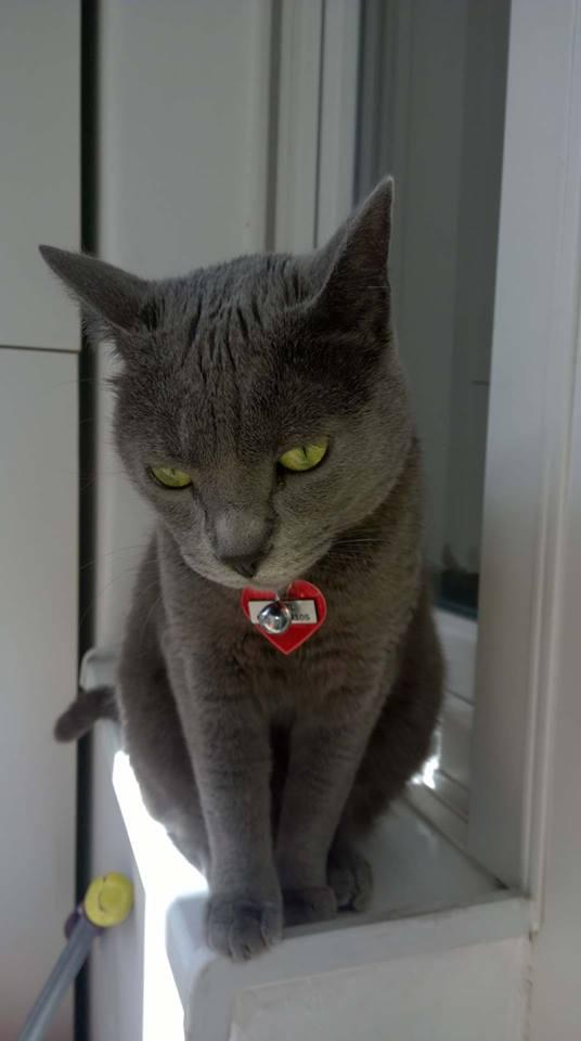 Sandrina mačka Cicvil se podjednako dobro snalazi na svim terenima