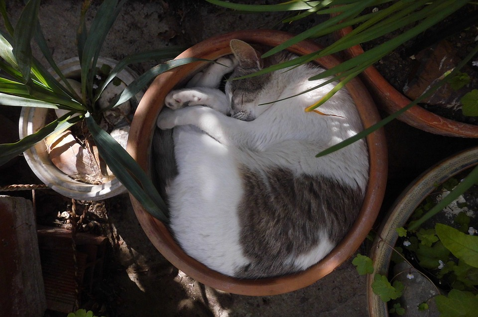 Mačke i saksije slažu se samo u ovoj varijanti