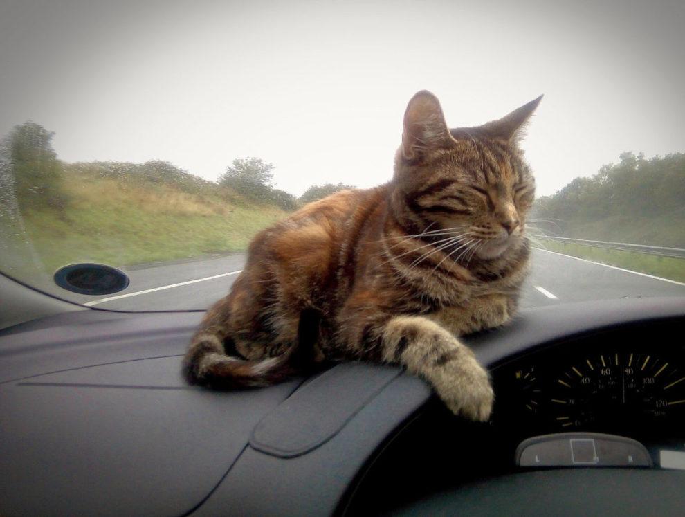 Mačka na putu