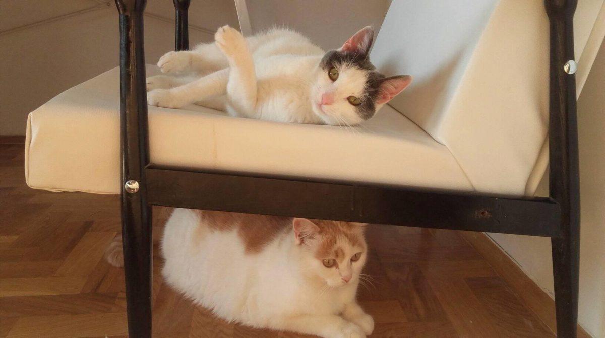 Monikine mačke Musavica i Mičigen se ne obožavaju preterano, ali imaju jedna drugu za društvo