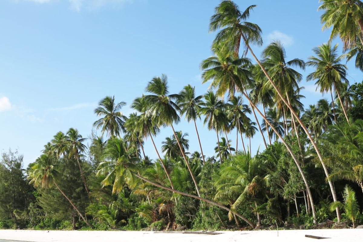 Kei ostrvo između Australije na jugu i Papua Nove Gvineje na istoku pripada arghipelagu Molučkih ostrva, na kojima je Jeleni bio najlepši zalazak sunca