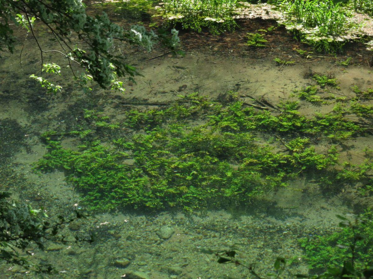 oš u antici smatralo se da reka Vrelo zbog svoje čistoće ima lekovita svojstva, foto: Vladimir Bojović