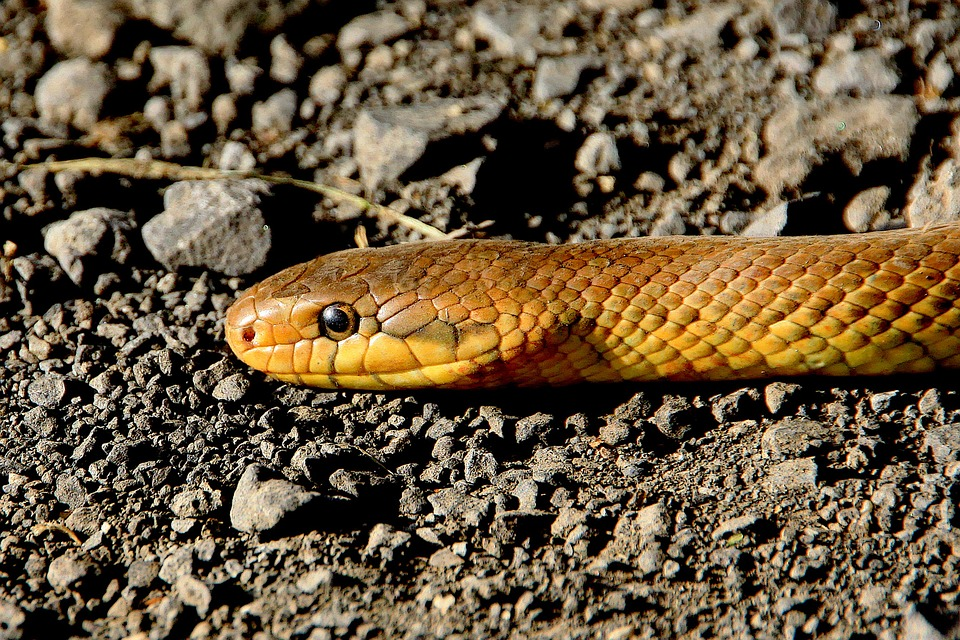 Kada je u pitanju rizik od ujeda otrovnih zmija, preventiva je najbitnija