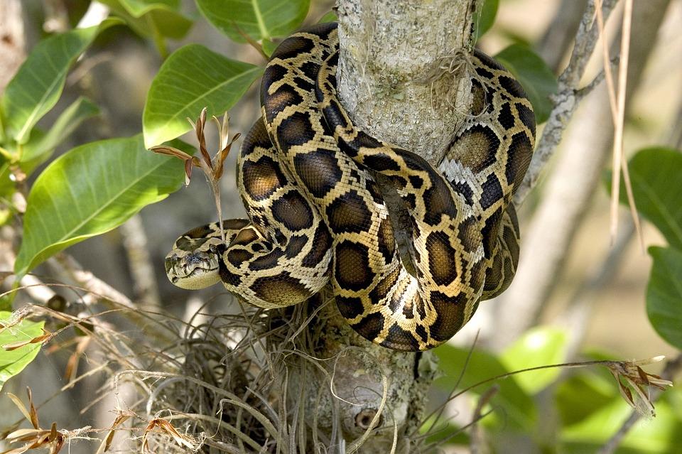 Ne brinite, ona ne spada u naše domaće zmije otrovnice, kod nas se na drveće penje smuk