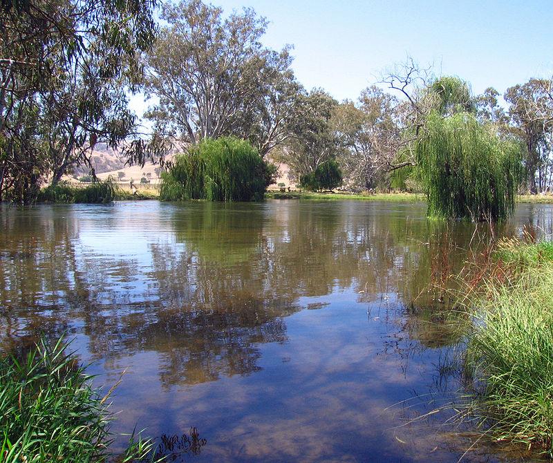 Jedna od reka basena Mari Darling, čiji je slab rečni tok delimično uzrokovan prekomernim ispumpavanjem vode, što je za posledicu imalo masovno izumiranje milion riba