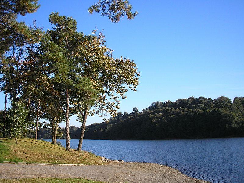 Selin, brana