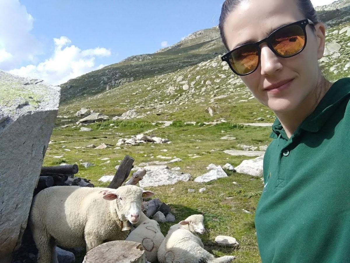 Ivana voli mir, titšinu i - ovce