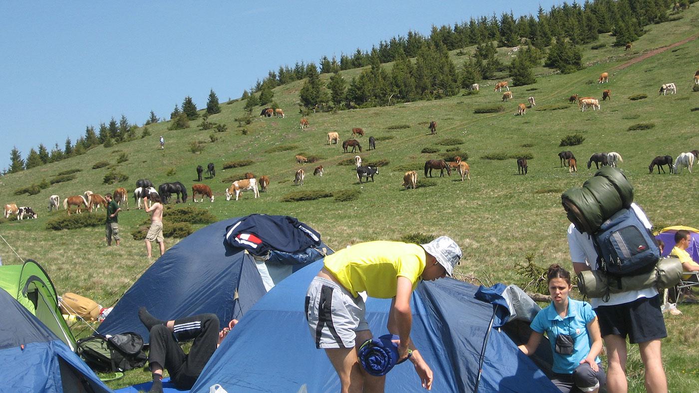Da, kampovanje u uređenim kampovima je super, ali probajte da uživate na Staroj planini među divnim životinjama, foto: Uroš Nedeljković