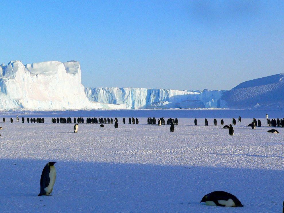 Pingvini na Antarktiku