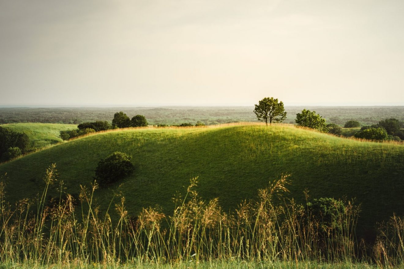Zagajička brda, Autor: Milena Popović