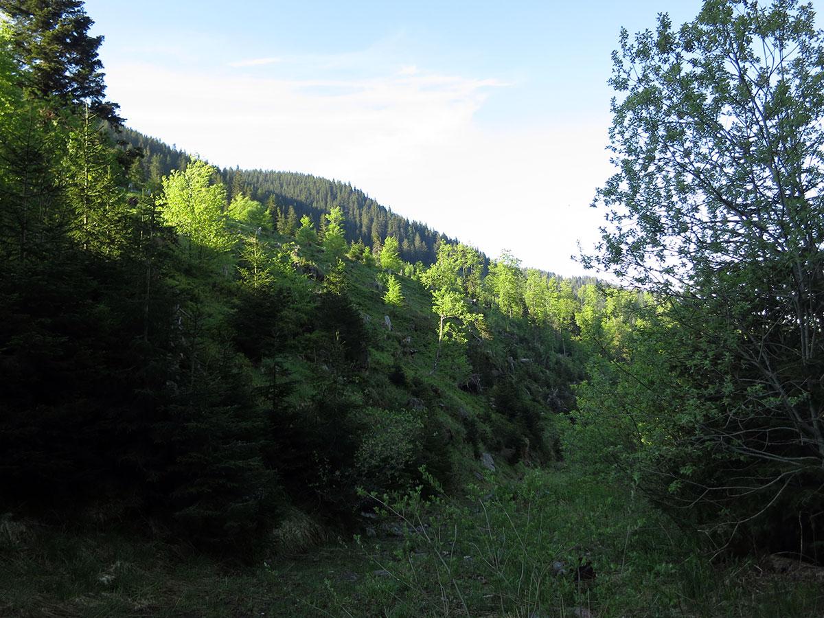 Arbinje je strogi rezervat prirode, foto: Uroš Nedeljković