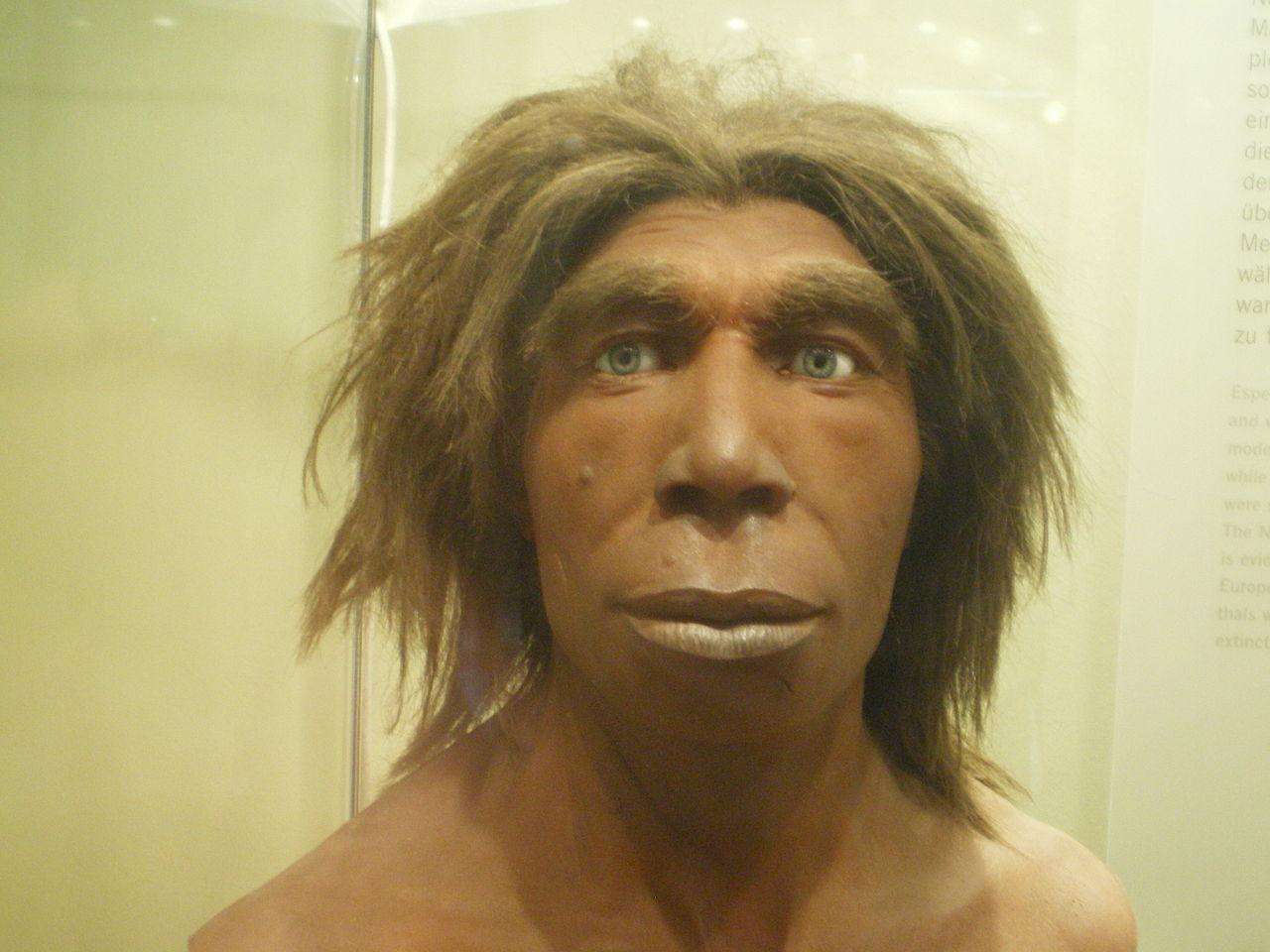 Iako možda liči na nekog lokalnog funckionera ili biznismena, zapravo neandertalac se razlikovao po mnogo čemu od današnjih ljudi. Prirodnjački muzej u Berlinu, autor: Matanya / Wikimedia