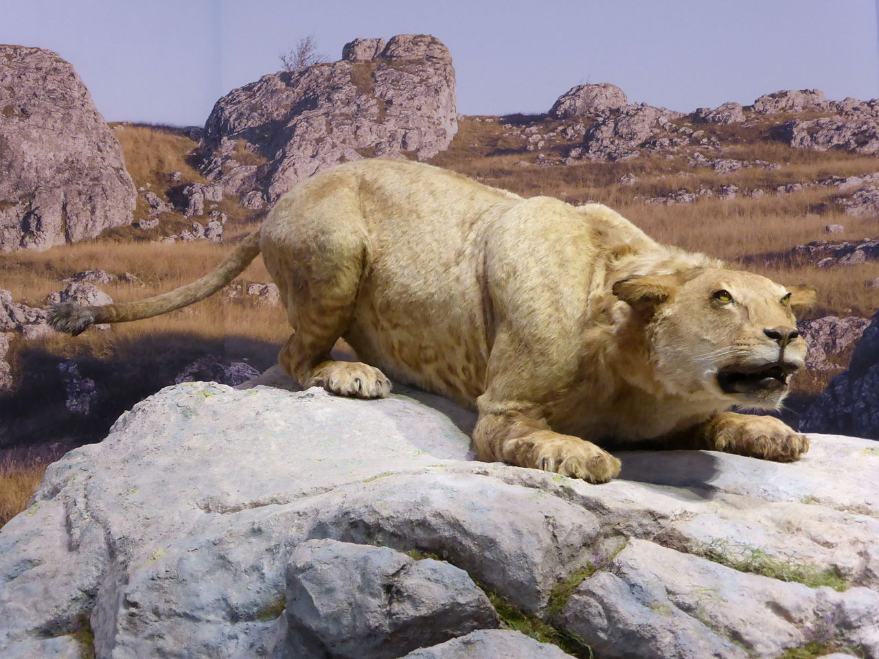 Pećinski lav, ilustracija: Sémhur / Wikimedia