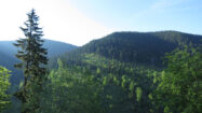 Stara planina obiluje gustim šumama, vodopadima i planinskim vrhovima od kojih su mnogi skoro 2000 mnv, foto: Uroš Nedeljković