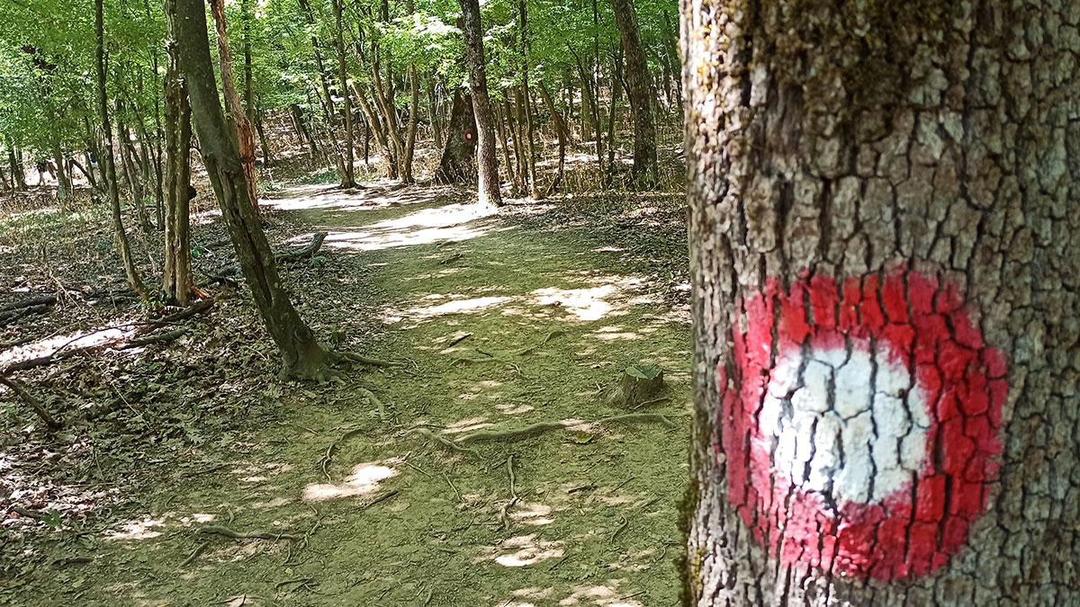 Do prerasti Vratne vodi dobra pešačka staza, foto: Dejan Baković