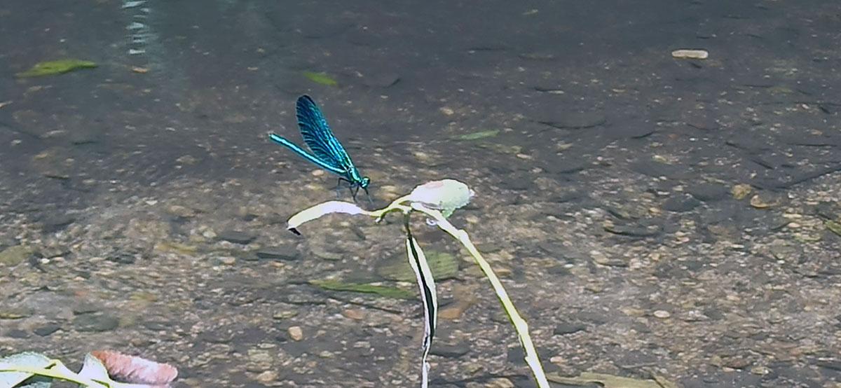 Na području kanjona reke Zamne evidentirano je 37 vrsta faune dnevnih leptira od kojih se dve vrste nalaze na evropskoj crvenoj listi, foto: Dejan Baković