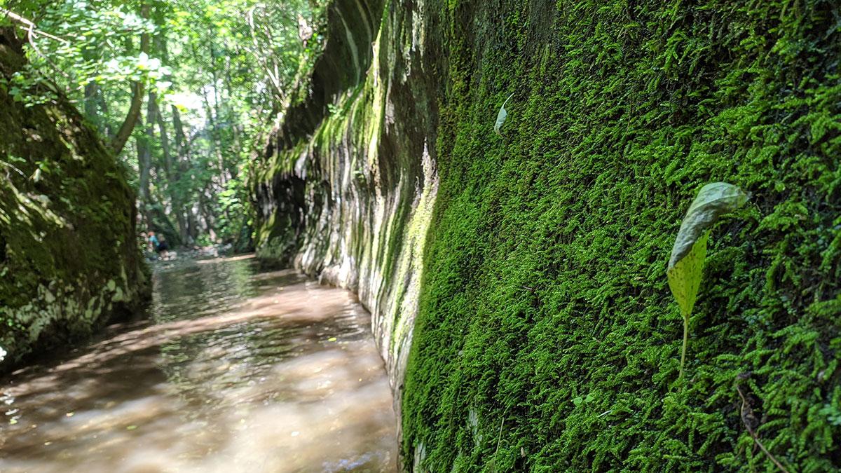 Medveđa reka nedaleko od ušća u reku Zamnu, foto: Urođ Nedeljković