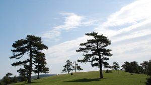 Maljen, Divčibare, foto: Vladmir Pecikoza, Wikimedia